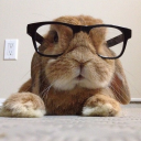 The_Lapin