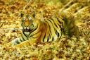 Tigerhaven